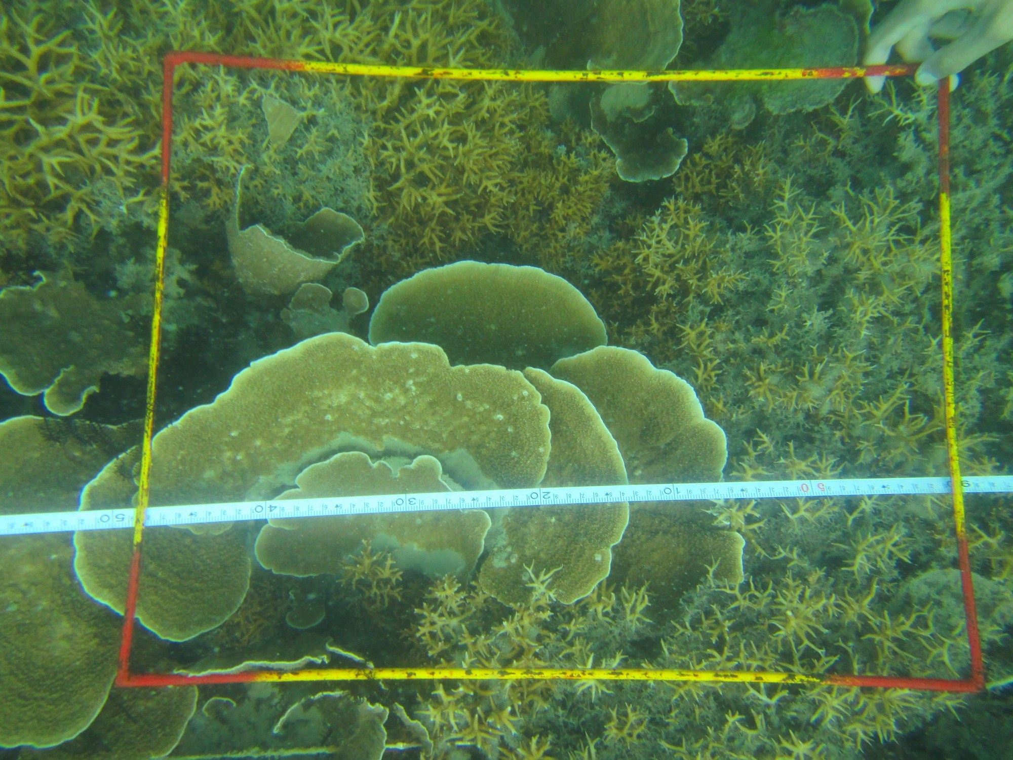 Metode Underwater Photo Transect (UPT)