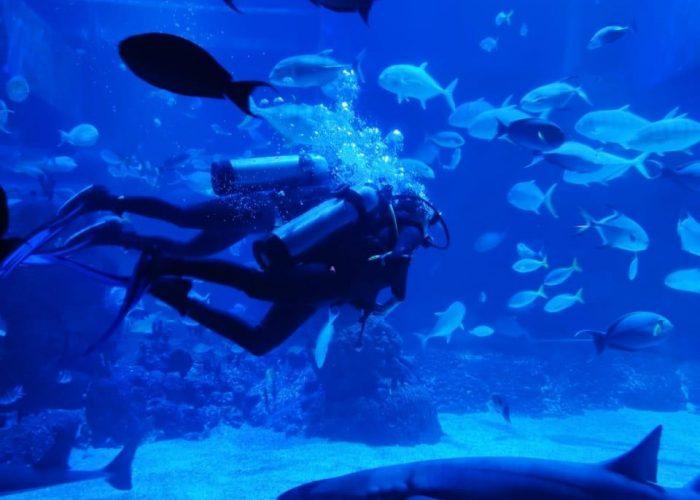 Jakarta Aquarium Experience