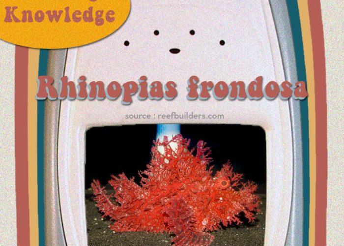 Rhinopias frondosa, Ikan atau Soft Coral?
